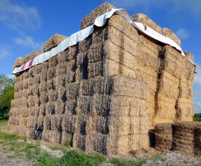 Enormous Haystack